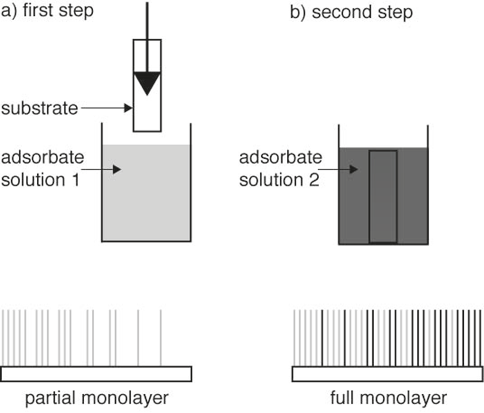 Fig. 2: Gradient preparation procedure. During a first step a coverage gradient is generated that can optionally be saturated with a second component during a subsequent immersion.
